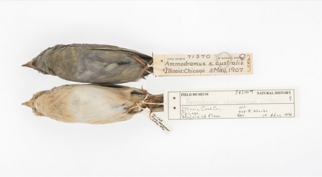 Soot-covered birds provide clues to 20th-century pollution