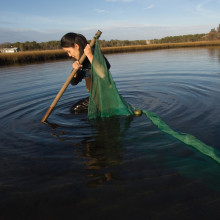 A student wades in the water holding a net trying to catch specimens.
