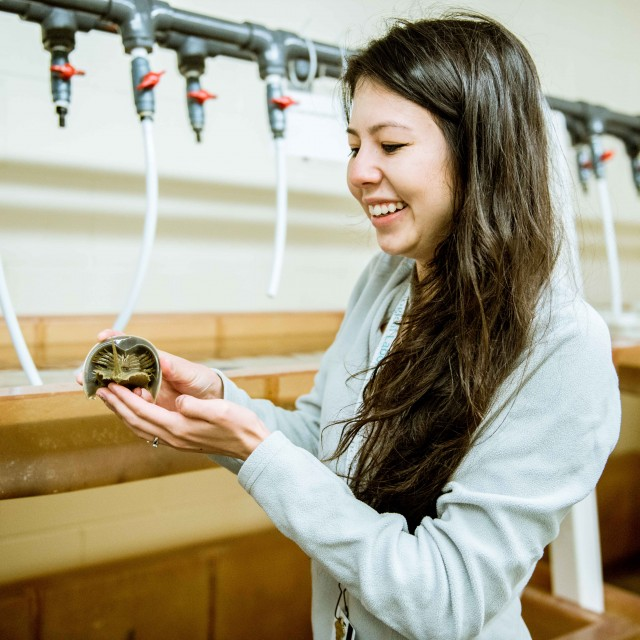 A smiling student holds a horseshoe crab in a lab at the Marine Biological Laboratory.