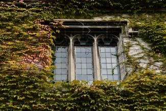 BA/MA Applicants page - picture of building window covered in ivy.