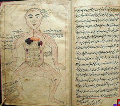 Persian 11