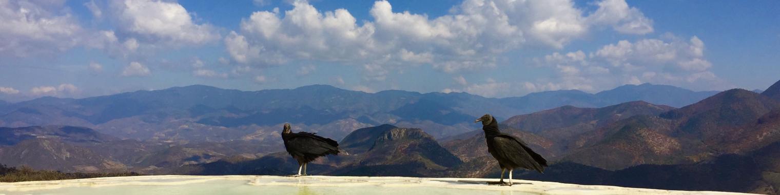 Mexico Birds