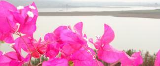 SALC Flowers